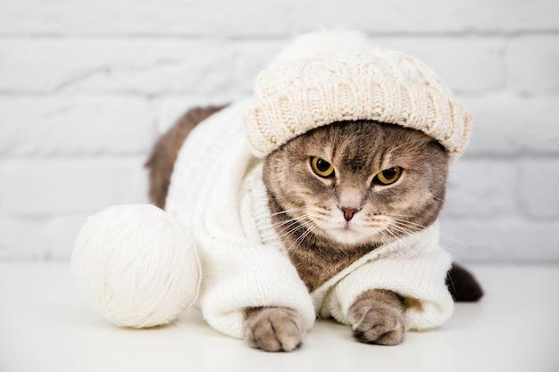 Chat mignon avec pull et bonnet Photo gratuit