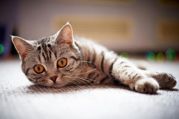 Chat mignon sur le sol sur un arrière-plan flou avec bokeh. Photo Premium