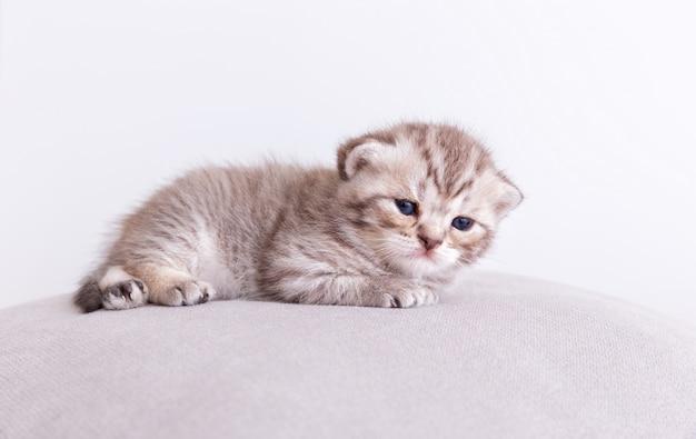 Chat minou sur l'oreiller. Photo gratuit