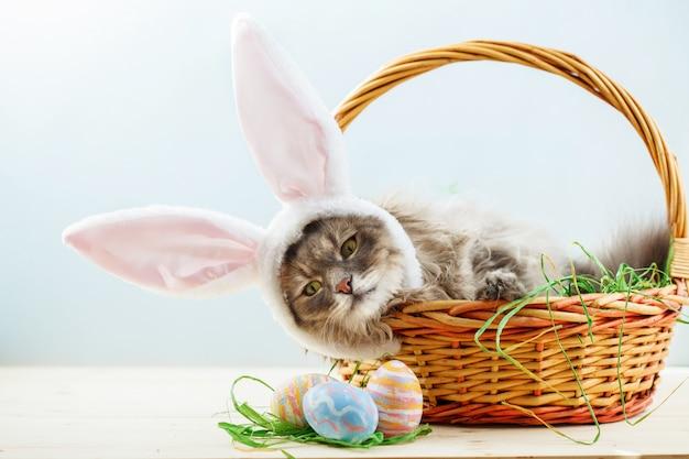 Chat Moelleux Gris Avec Des Oreilles De Lapin Dans Le Panier De Pâques Avec  Des Oeufs De Pâques | Photo Premium