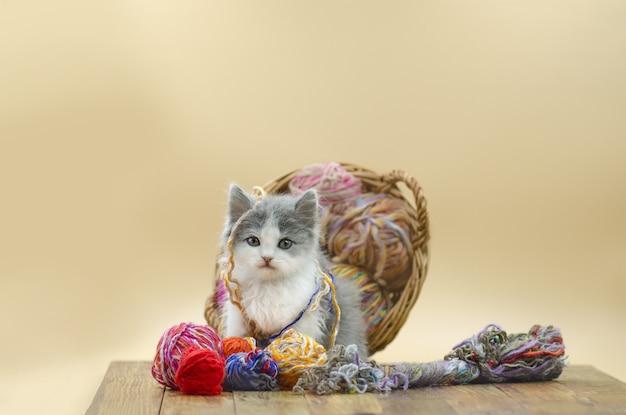 Chat moelleux mignon joue avec une balle de tricot. Photo Premium