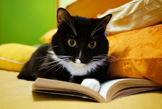 Chat noir et blanc et livre ouvert Photo Premium
