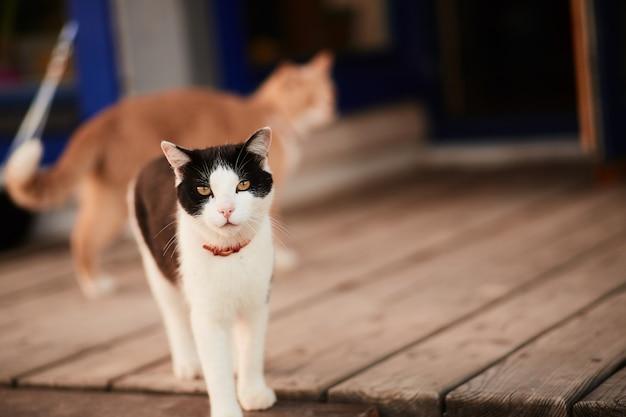 Chat noir et blanc se dresse sur le porche en bois d'une maison de campagne Photo gratuit