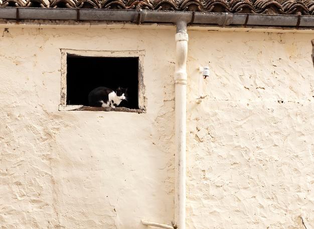 Chat noir et blanc Photo Premium