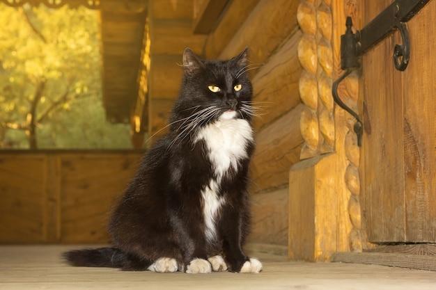 Chat noir d'un conte de fée Photo Premium