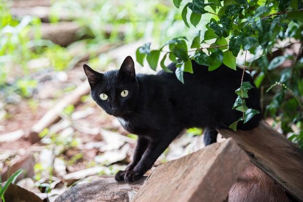 Grosse bite noire et minuscule chatte