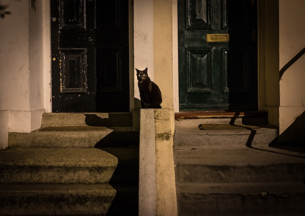Chat noir dans la rue Photo gratuit