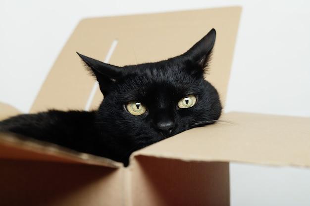 Chat Noir Montrant Son Visage Dans Un Carton D'expédition Photo Premium