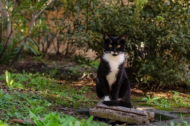 Chat noir sans abri au cou blanc assis sur la brique du parc. concept de la faune Photo Premium