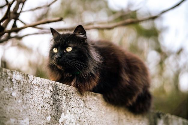 Chat Noir Sauvage Aux Yeux Verts Photo gratuit