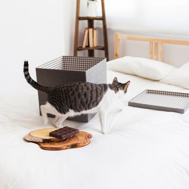 Chat près du chocolat et boîte sur le lit Photo gratuit