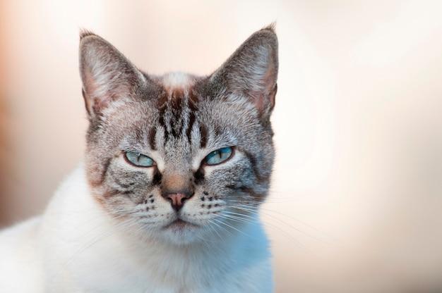 Un chat qui dort Photo Premium