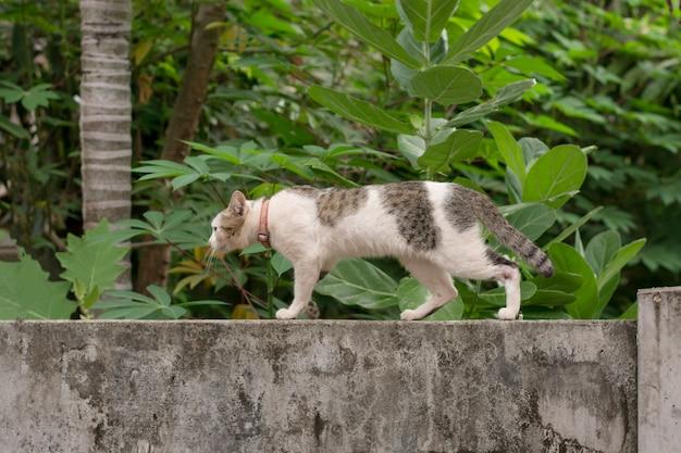 Chat qui marche accroupi sur un mur de pierres et de blocs Photo Premium