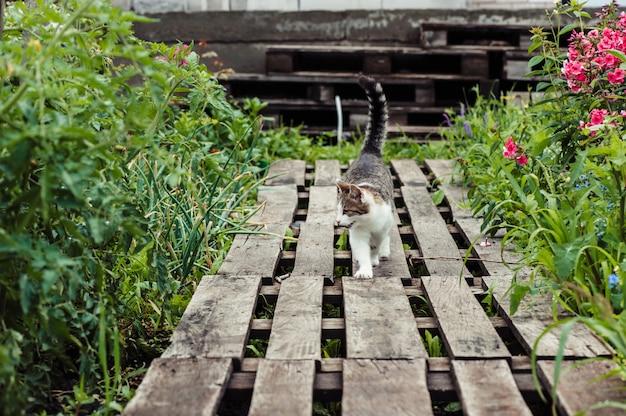 Un chat à rayures grises se promène dans un jardin fait de palettes en bois. Photo Premium