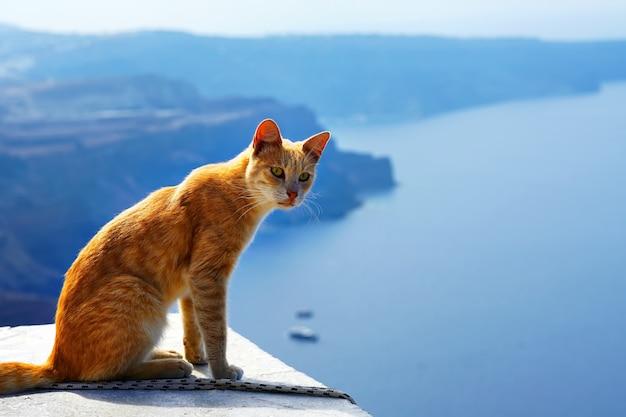 Chat rouge grec, contre la belle vue sur la mer de santorin, grèce Photo Premium