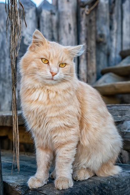 Chat rouge moelleux drôle assis dans la rue Photo Premium