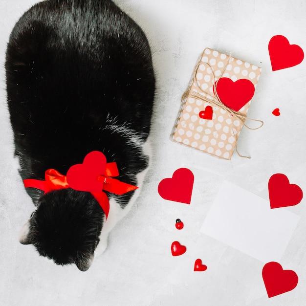 Chat avec ruban près des coeurs présents de boîte et d'ornement Photo gratuit