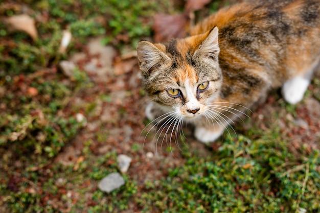 Chat sans abri sans race dans un abri pour une promenade dans la rue Photo Premium