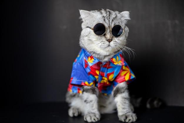 Le chat scottish fold porte des lunettes de soleil et une chemise. Photo Premium