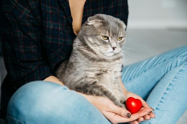 Chat sérieux assis sur les mains de l'hôtesse Photo gratuit