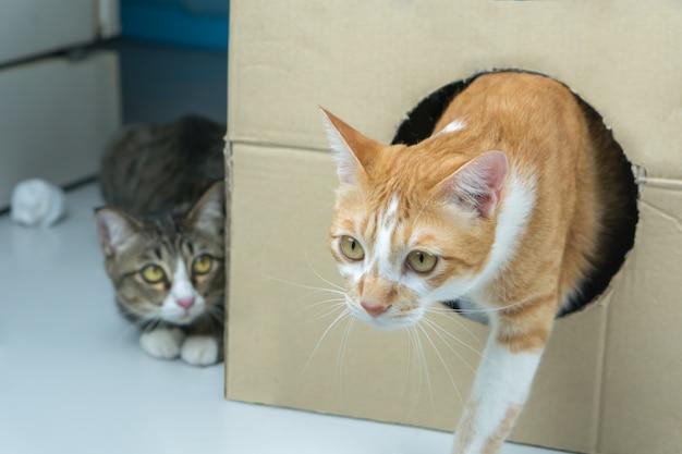 Le chat sort de la grande boîte. Photo Premium