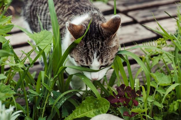 Chat tigré dans le gros plan d'herbe verte Photo Premium