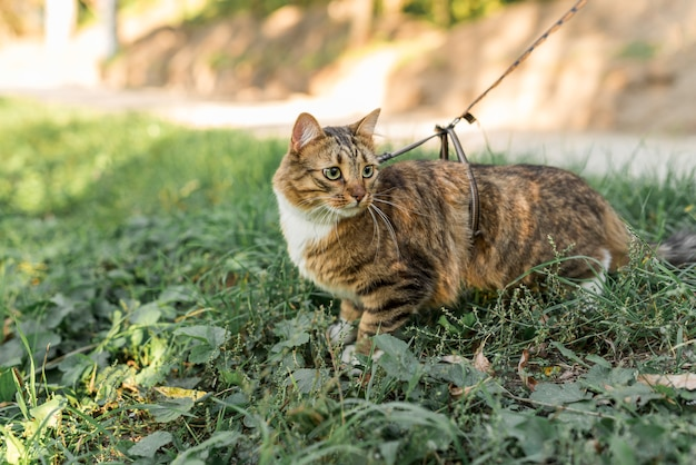 collier chat jardin