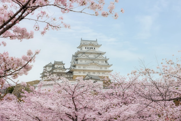 Château de himeji avec de belles fleurs de cerisier au printemps à hyogo près d'osaka, au japon. Photo Premium
