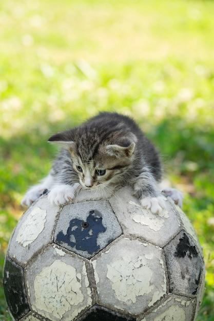 Chaton avec un ballon de foot Photo Premium