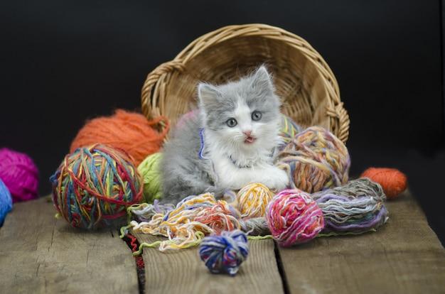Chaton bébé jouant avec du fil de balle. chaton avec une balle Photo Premium