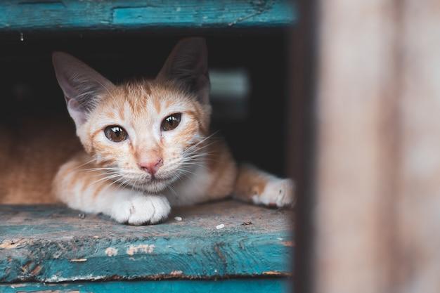 Chaton errant, chat dans la ville Photo Premium