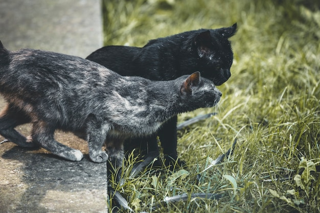 Des chatons jouent dans la cour de la maison Photo Premium