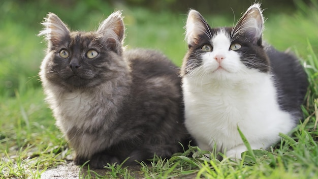 Chats Assis Dans L'herbe Verte Photo Premium