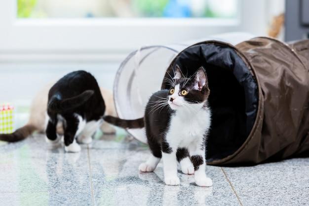 Chats mignons avec tunnel de jeu au sol Photo Premium
