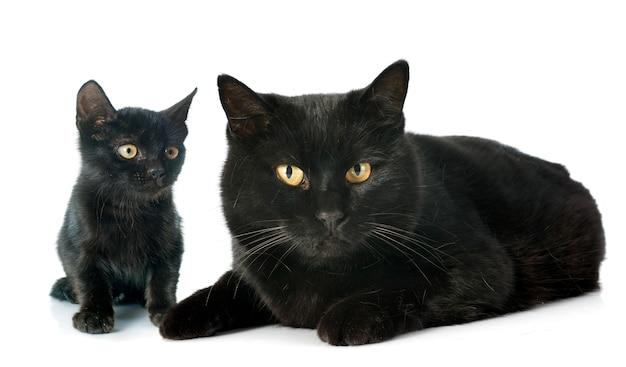 Chats noirs Photo Premium