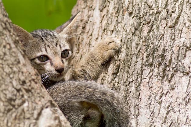 Les chats ont l'air mignon et fait des gestes Photo Premium