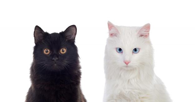 Chats Persans Noirs Et Blancs Aux Yeux Bruns Et Bleus Photo Premium