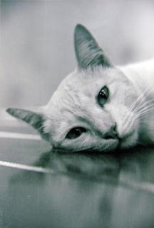 gratuit chatte photoes