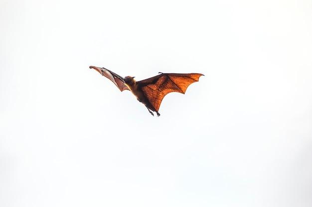 Les chauves-souris volent Photo Premium