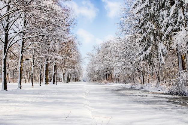 Chemin enneigé dans plusieurs arbres dans une forêt Photo Premium