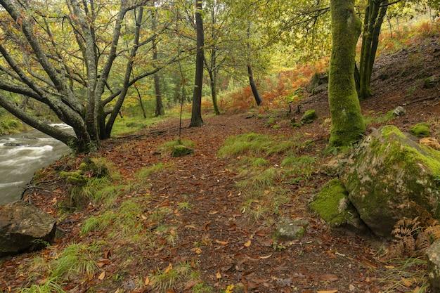 Chemin Le Long De La Rivière Tamuxe En Galice. Photo Premium