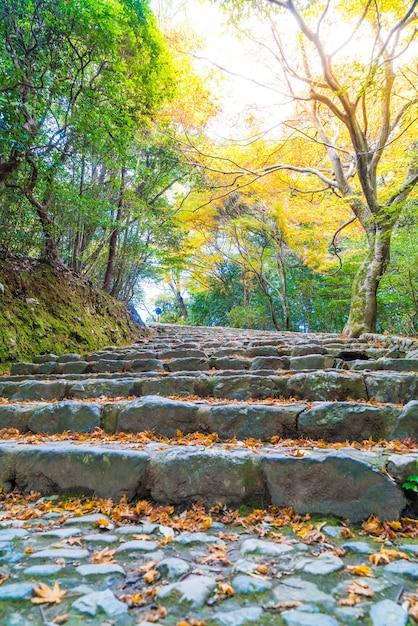 Chemin de promenade avec des feuilles d'érable rouge en fleurs à arashiyama Photo Premium