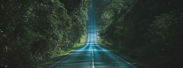 Chemin à Travers Le Concept De Chemin Naturel De La Forêt Automnale Photo Premium