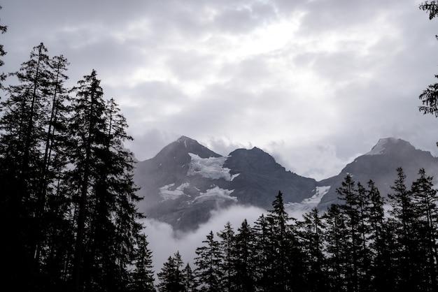 Chemin vide avec forêt et brumeux Photo Premium
