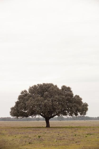 Chêne holms, ilex dans une forêt méditerranéenne. Photo Premium