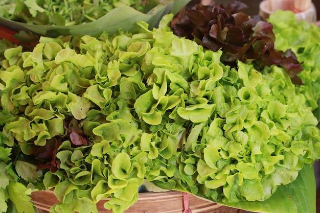 Chêne vert chêne rouge dans le panier Photo Premium