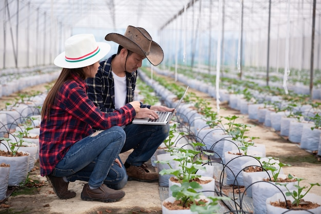 Chercheur agricole avec la tablette inspecter lentement les plantes. Photo gratuit