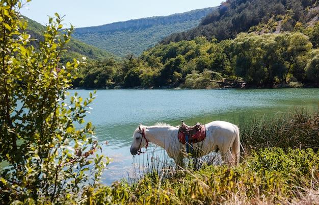 Le cheval boit de l'eau au bord du lac Photo Premium