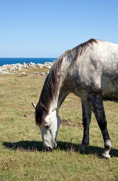 Cheval broutant dans les montagnes de nueva de llanes en espagne Photo Premium