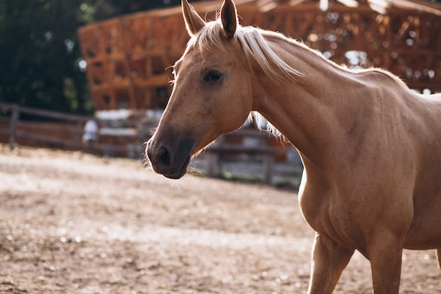Cheval brun au ranch Photo gratuit